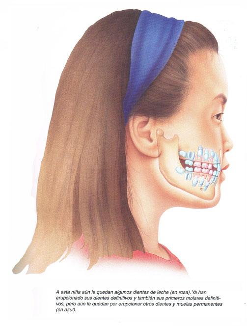 Dentista Jaen